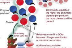 Social microbes